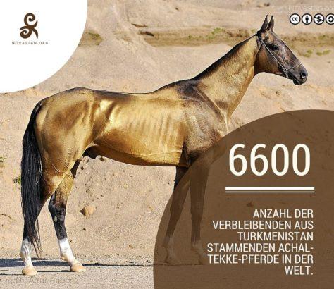 Achak-Tekke Pferd Turkmenistan Wahrzeichen