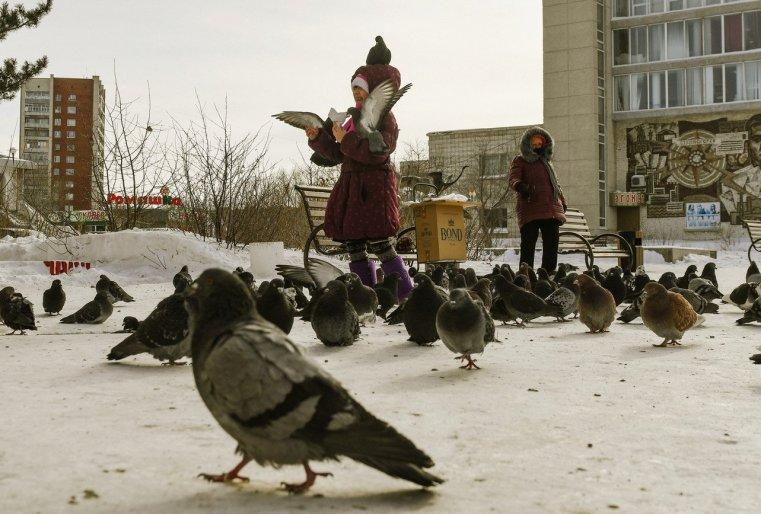 Zelinograd 25 Stepnogor Kasachstan Tauben