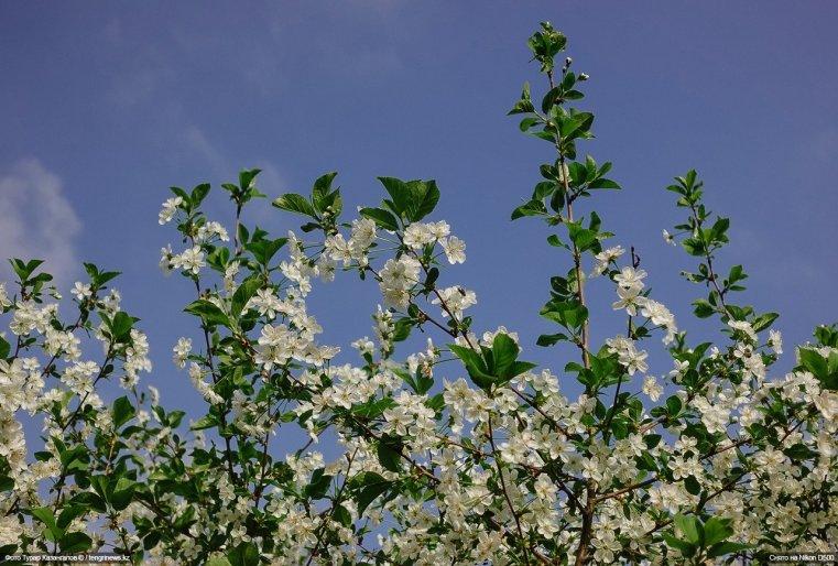 Blumen Schymkent