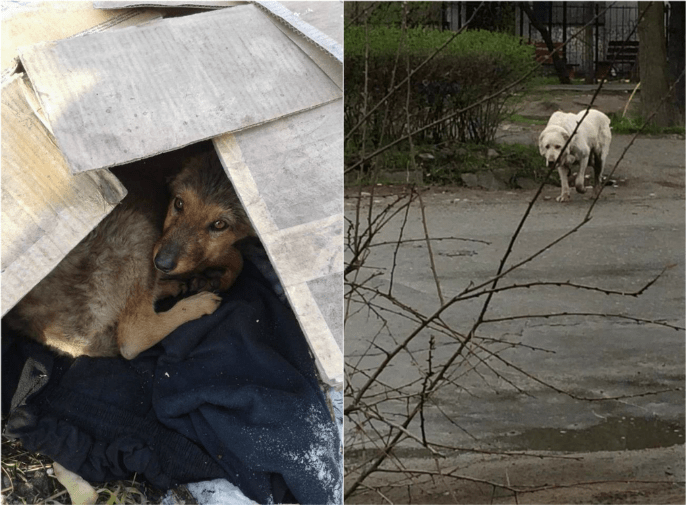 Herrenlose Hunde in Bischkek Kirgistan