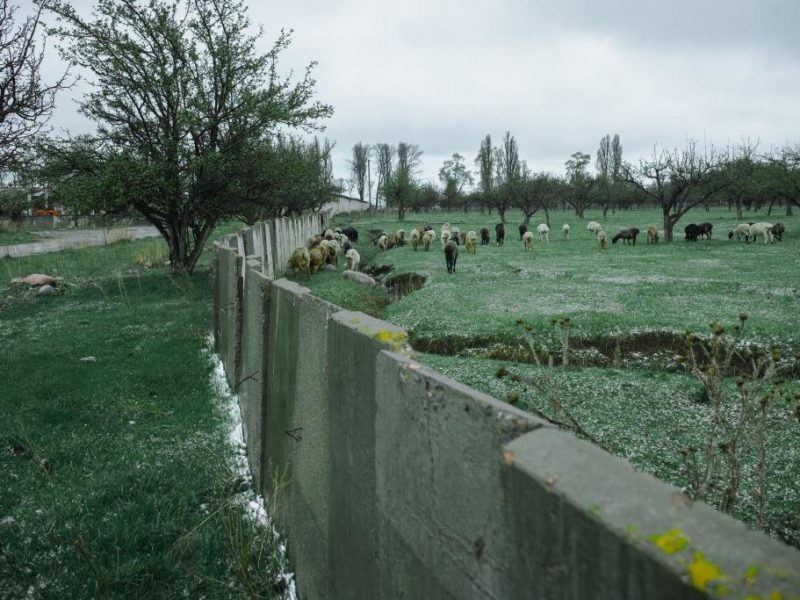 Tien Tran Schafe Kirgistan Grigorjewka