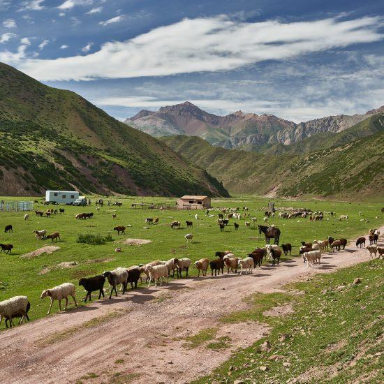 Schafe Tal BIld des Tages