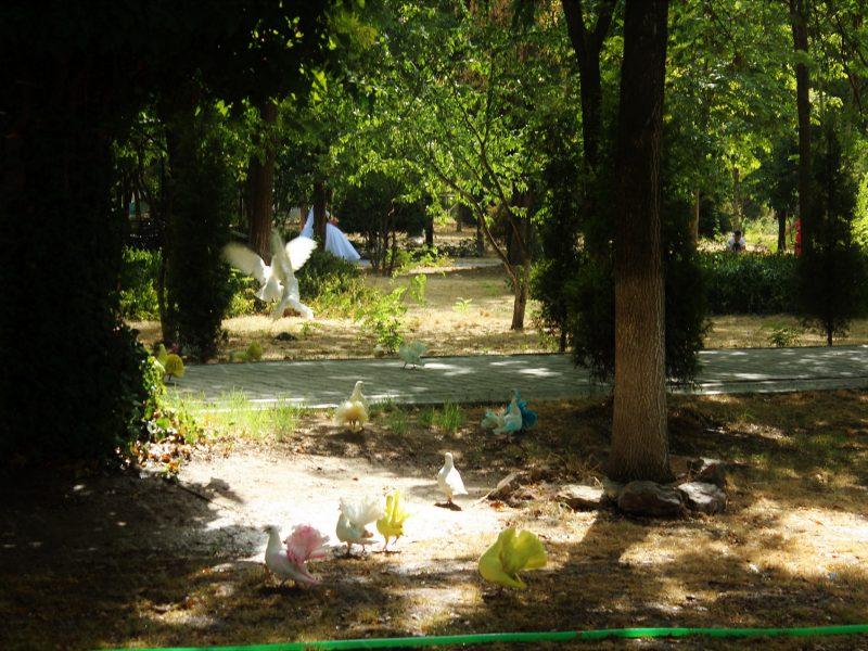 Taschkent Usbekistan Hochzeit Tauben Park