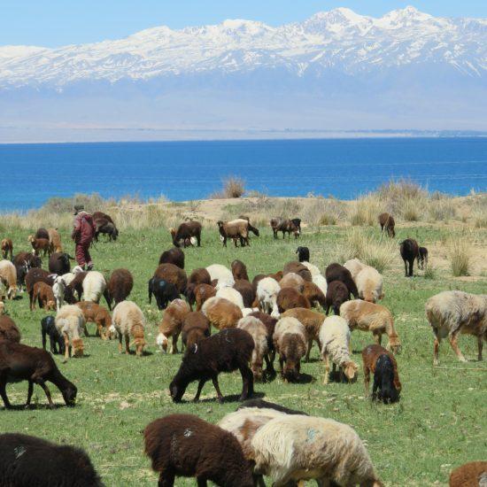 Issikköl-See Kirgistan Viehzucht Gebirge