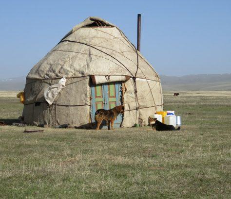 Kirgisistan Song-Köl Jurte Hund