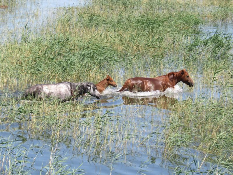 Kirghizstan Nomade Pferd