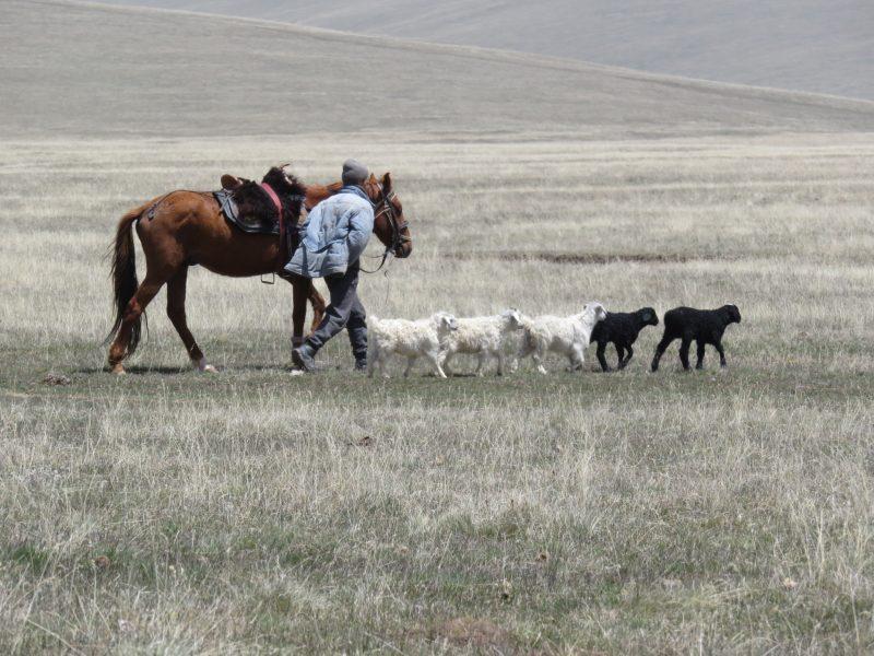 Kirgisistan Schäfer