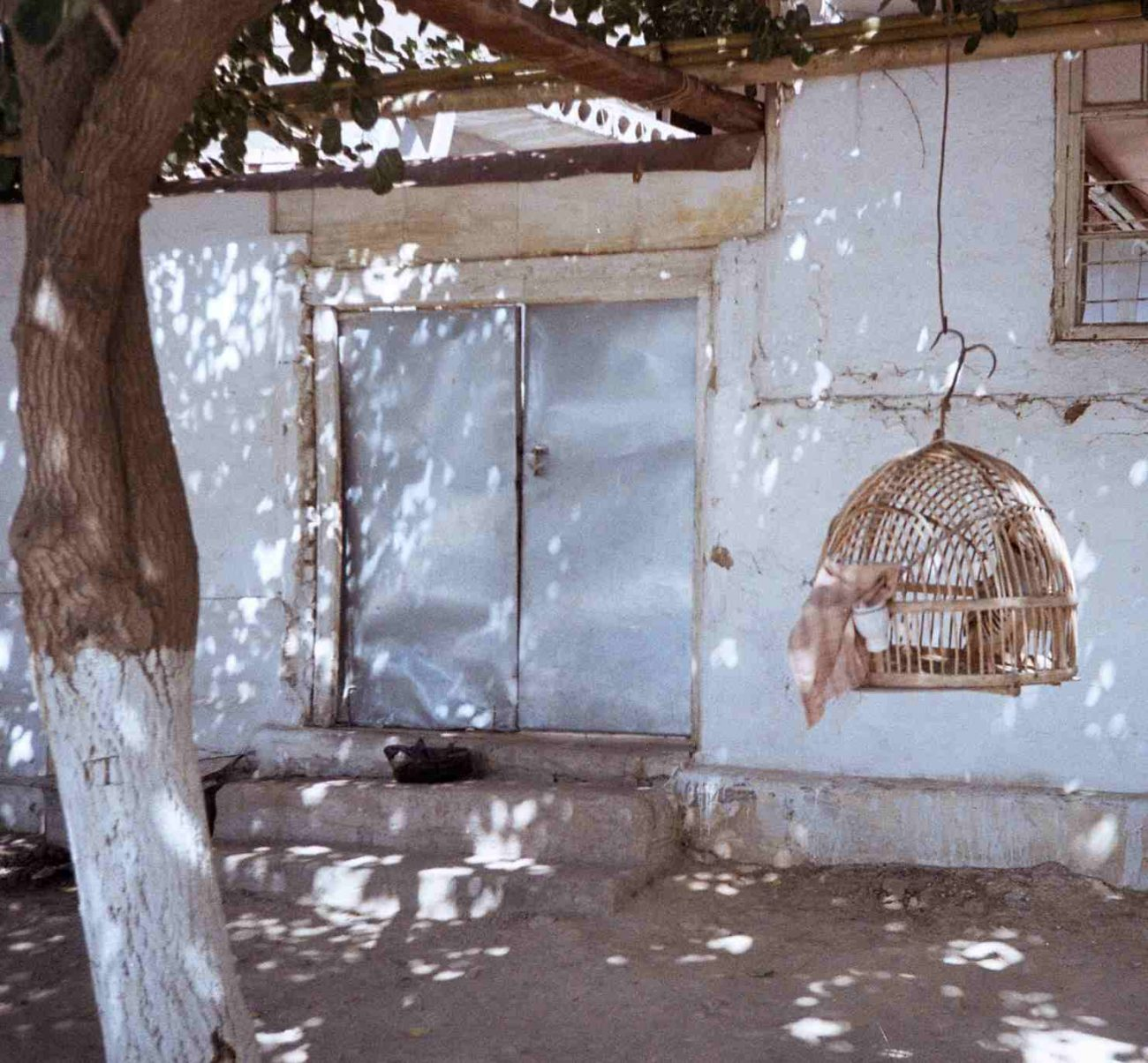 Ein Vogelkäfig in einem usbekischen Hof