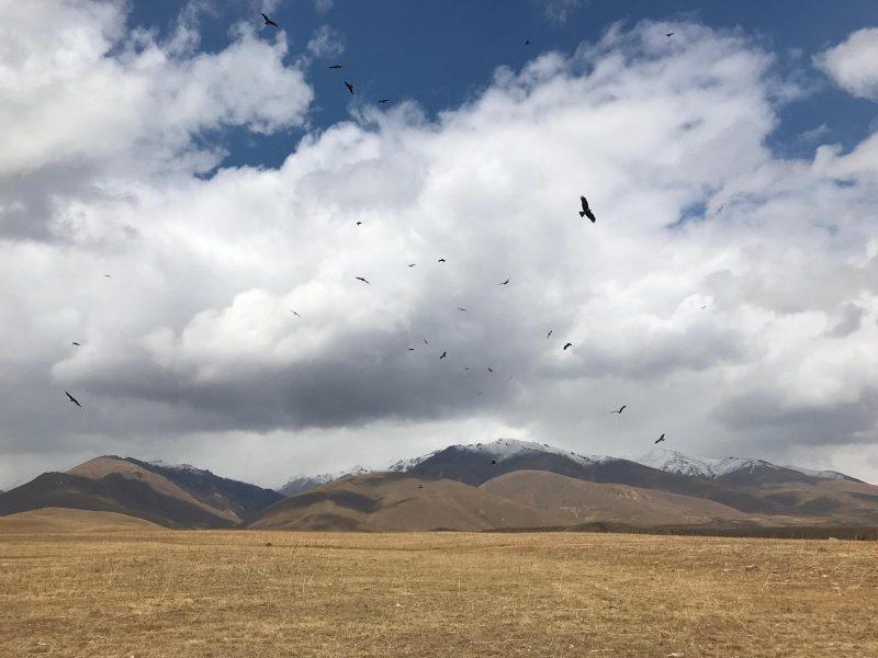 Adler fliegen über der Straße zwischen Toktogul und Jalal Abad im westlichen Kirgistan.