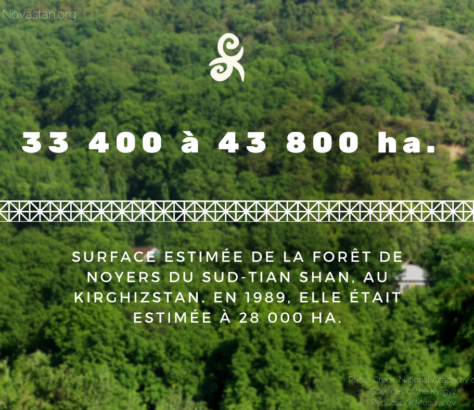 Forêt Noyers Kirghizstan Central Asia Facts