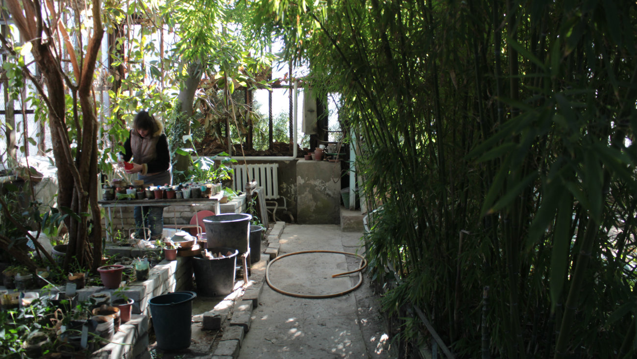 Irina Bondartsova Orangerie Bichkek Kirghizstan Plantes Arbre