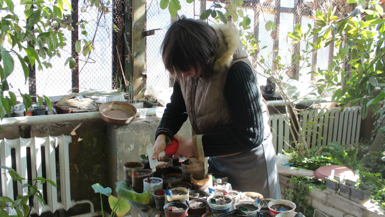 Irina Bondartsova Orangerie Bichkek Kirghizstan Plantes