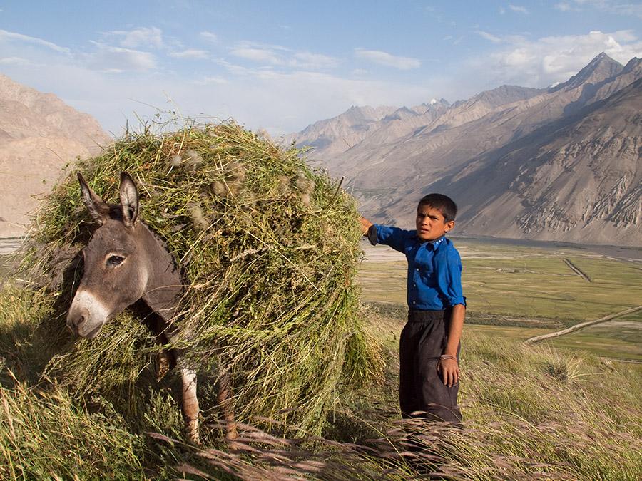 Pamir Tadjikistan Ane Enfant Prairie Montagne