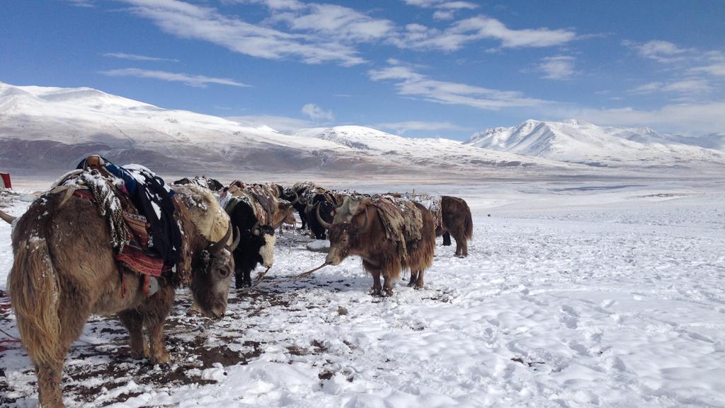 Pamir Kirghiz Afghanistan Yak Neige Montagne