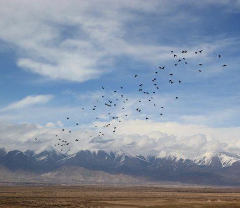 Oiseaux Kirghizstan Issyk-Koul