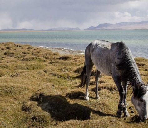 Cheval Son Koul Kirghizstan Lac Prairie