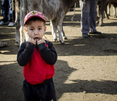 Kotchkor Enfant Marché Animaux Kirghizstan