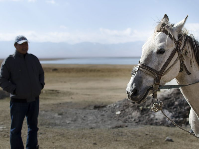 Kirghizstan Son Koul Cheval Race Maître