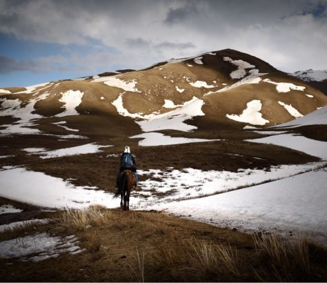 Un cheval dans les montagnes du Kirghizstan