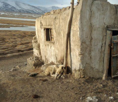 Un chien dans le Pamir Tadjikistan