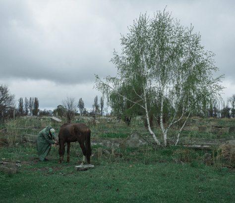 cheval Kirghizstan Grigorievka