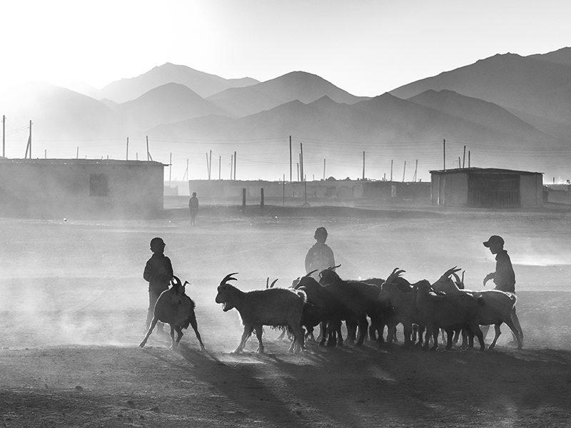 Rangkoul Kirghizstan élevage