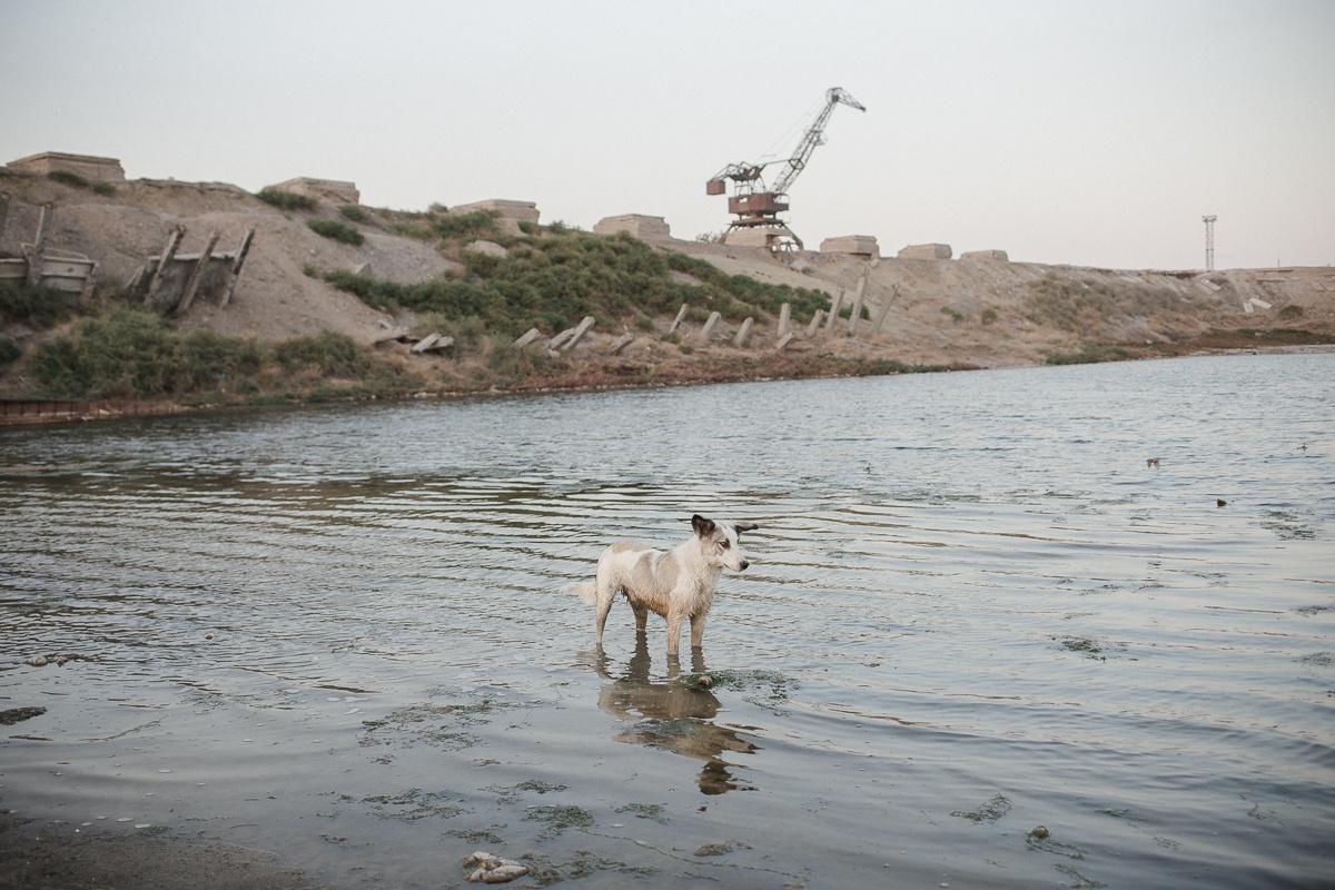 Tien Tran Aralsk Mer d'Aral Chien Kazakhstan