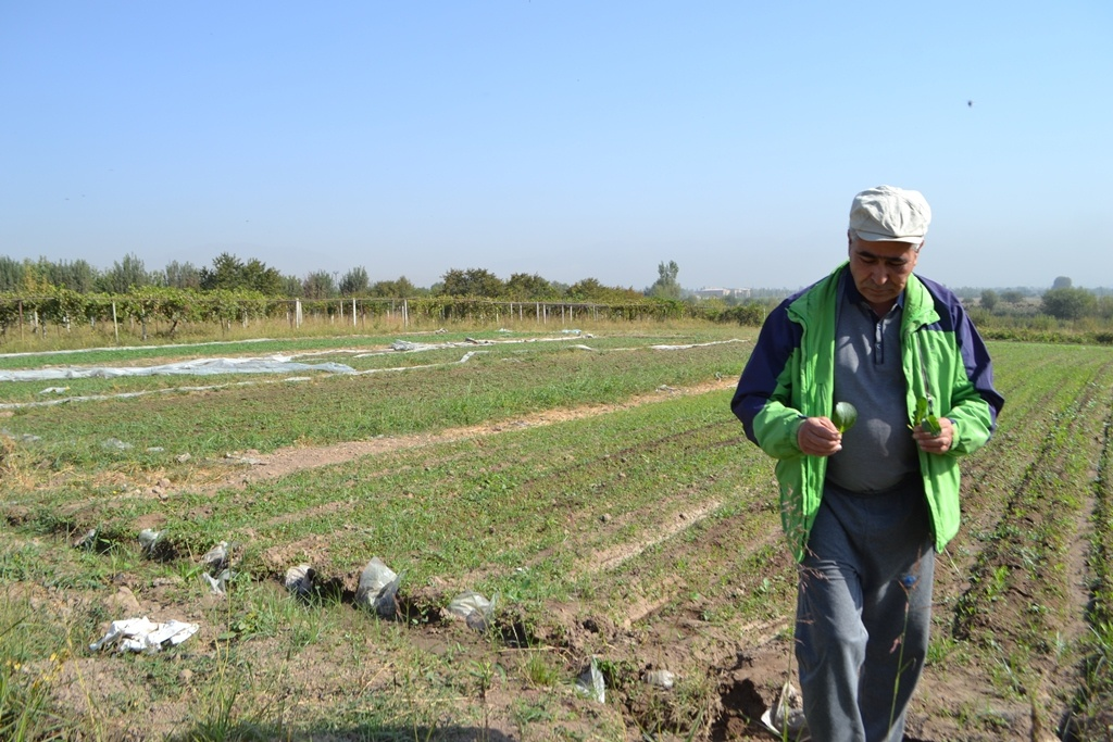 Tadjikistan, Agriculture
