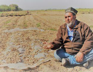 Fermier tadjik