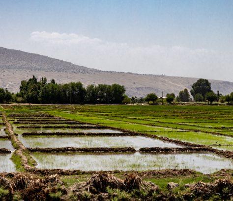 Khoudjand Tadjikistan Riz
