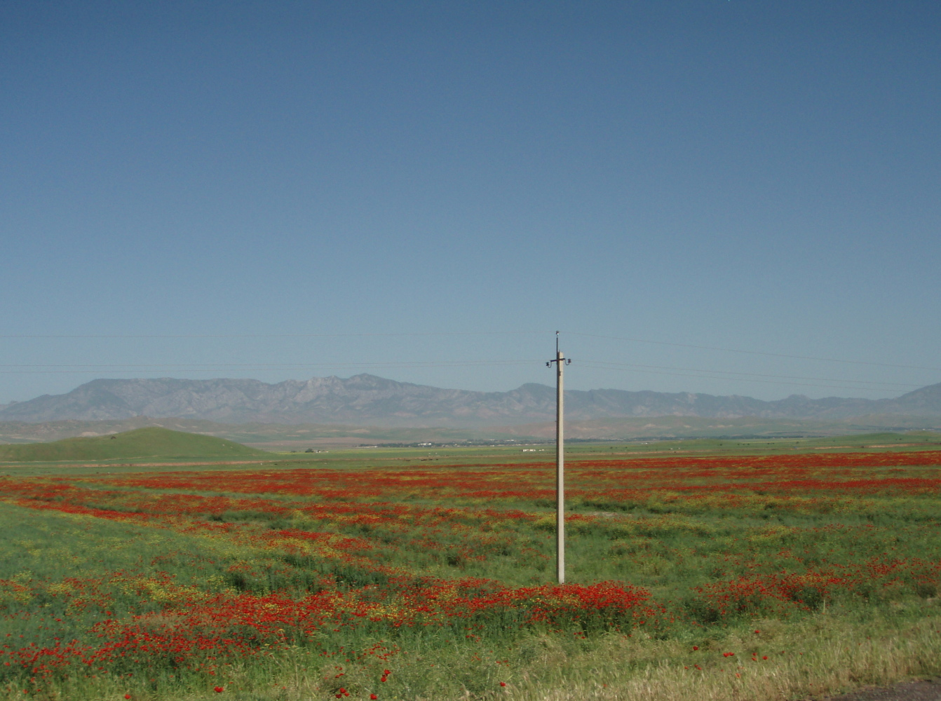 Tadjikistan Danghara coquelicot