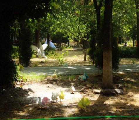 Tachkent Ouzbékistan Pigeons Marriage Parc