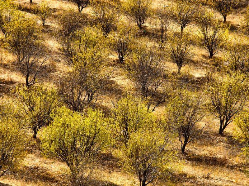 Amanderaie Tchimgan Automne Ouzbékistan Photo du Jour