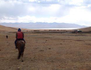 Khassan Cheval Son Koul Kirghizstan Vol