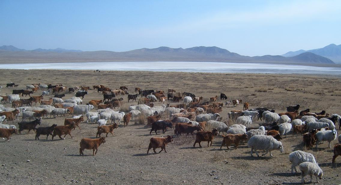 Tadjikistan Asie Centrale Troupeau Chèvres Lac Montagnes