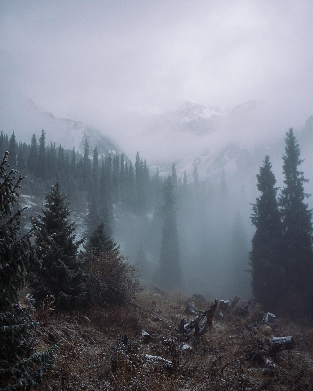 Kazakhstan Montagnes Almaty Arbres