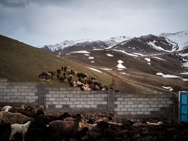 Kirghizstan Élevage Montagnes