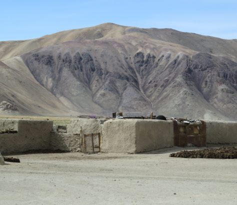 Pas d'arbres dans le village de Bulunkul, à l'est du Pamir, mais des bovins.