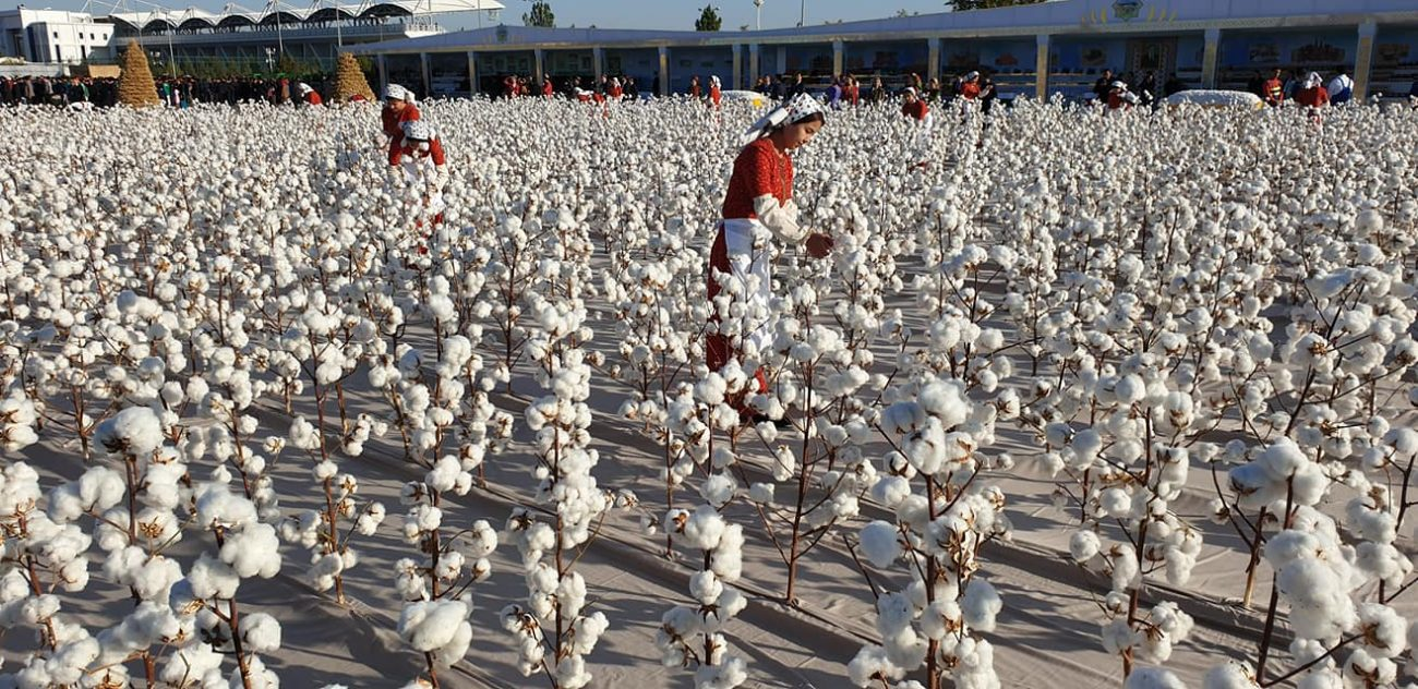 coton Turkmenistan production récolte augmentation