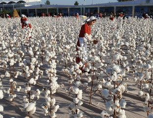 coton Turkmenistan production récolte augmentation