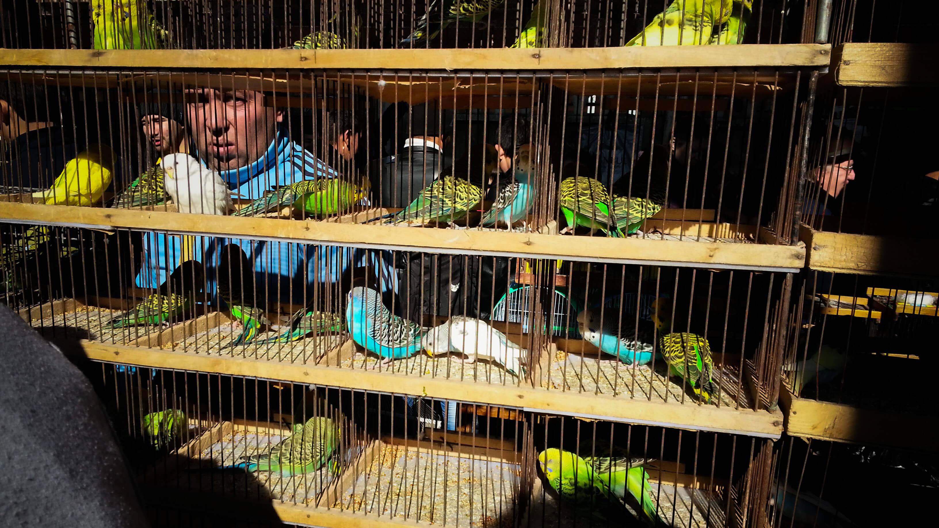 Bazar Yangiabad Tachkent Ouzbékistan oiseaux perroquet Stanislav Magay