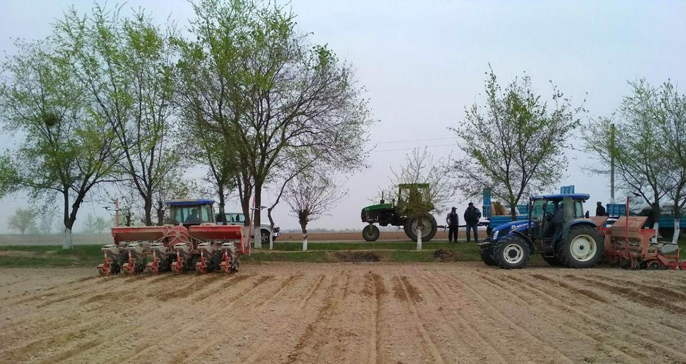 Agriculture Ouzbékistan