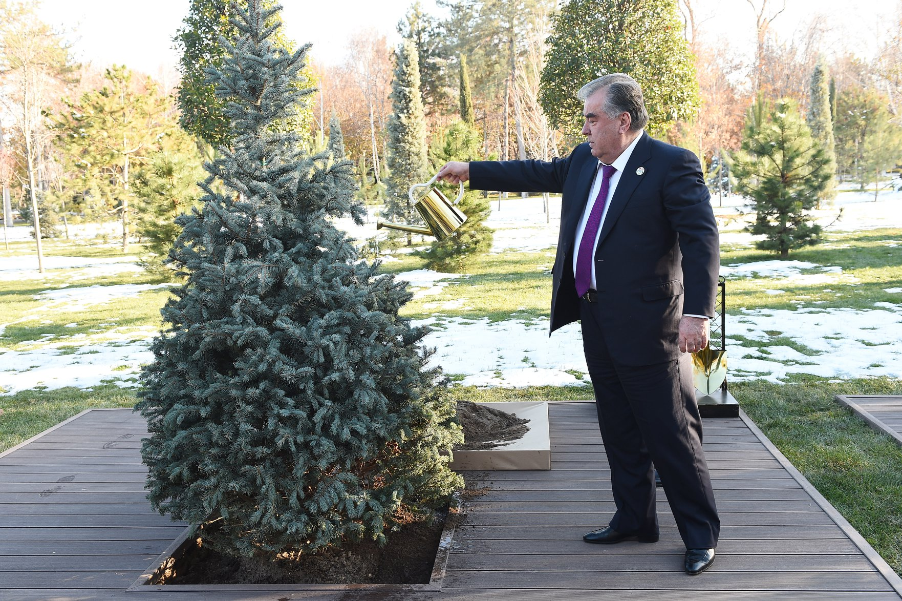 arbre plantation symbole tadjikistan Asie centrale sommet Tachkent
