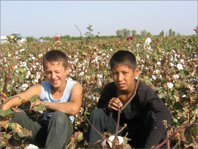 Coton Ramassage forcé Ouzbékistan Enfants