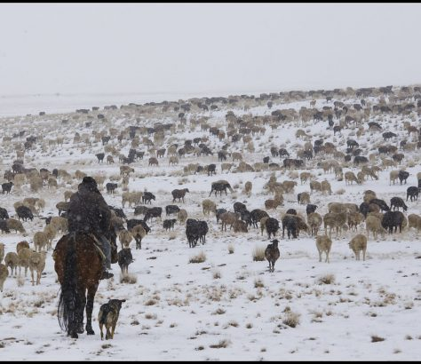 Neige Steppe Kirghizstan Elévage Berger