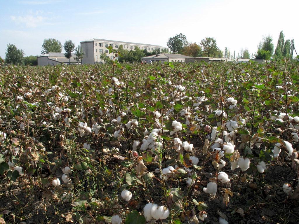 Coton Ouzbékistan Etat Contrôle Economie Abolition