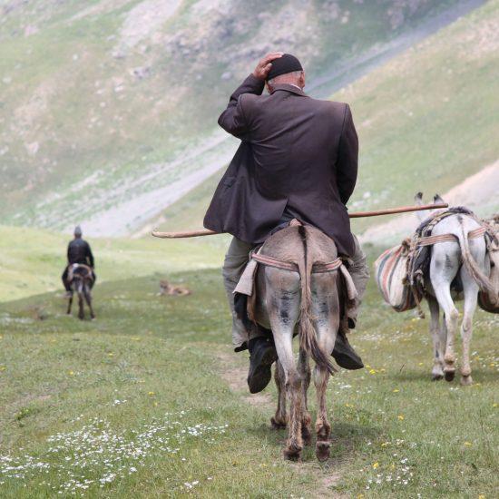 Serafscha Tadjikistan Montagnes Âne