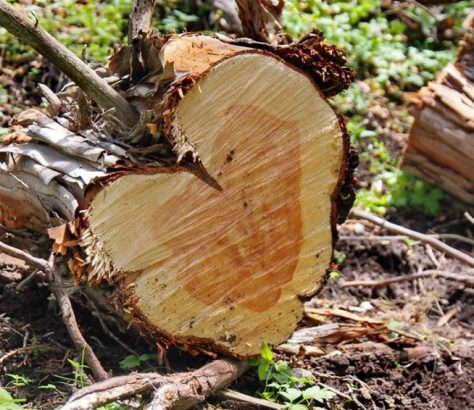 Kirghizstan Ecocide Déforestation Environnement Bois Forêt