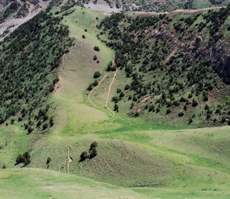 UCA University of Central Asia Forêt Genévriers Déforestation Tadjikistan Kirghizstan
