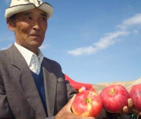 Les pommes d Issikul financées par Kompanion. Crédit kompanion